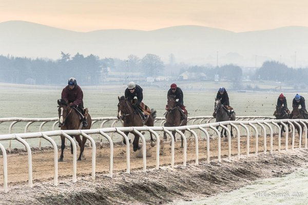 picture of racehorses cantering on the Curragh gallops