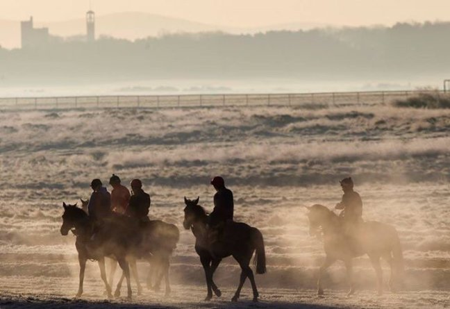 horses on the gallops