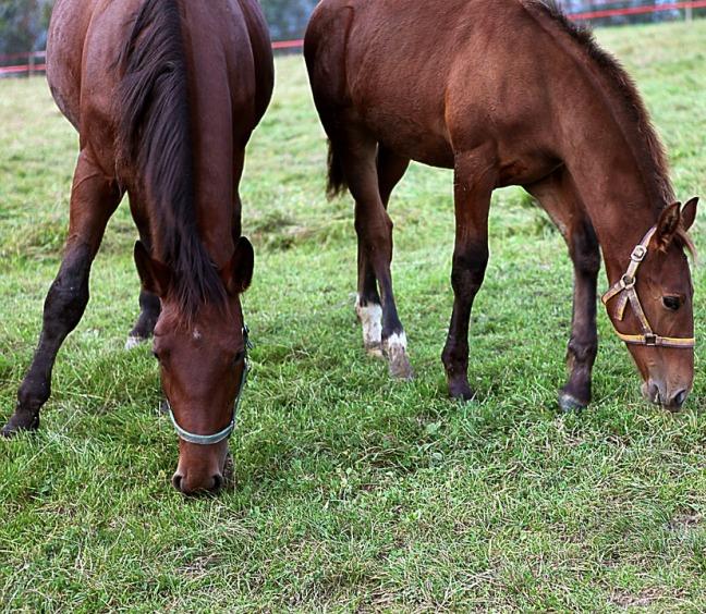9_horse_racing