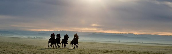 horse racing picture on the gallops