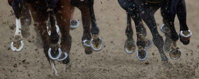Horse racing all weather image